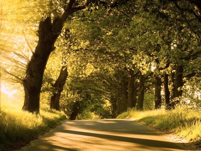 camino arboles