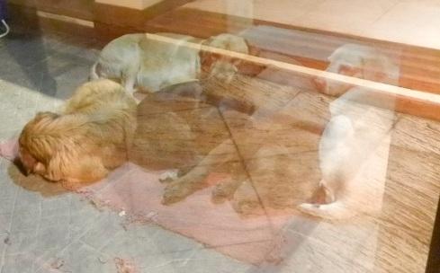 Parte del clan perruno de Moni, tras la ventana