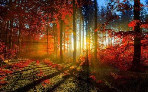 amanecer otoño