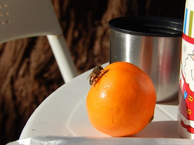 abeja norte