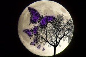 Butterfly_moon