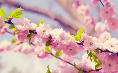 floresprimavera