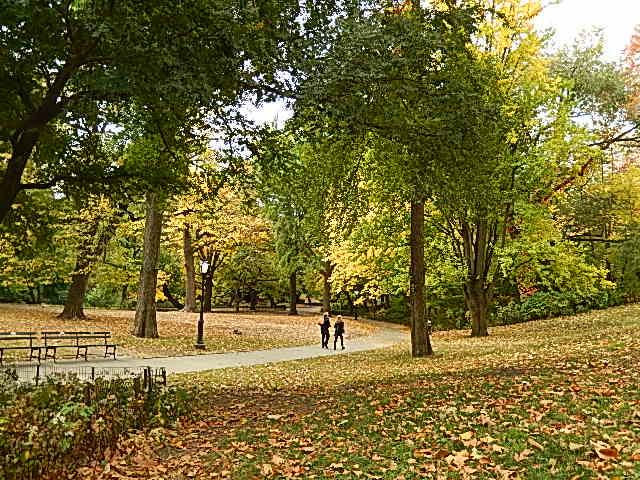 Una mañana en Central Park